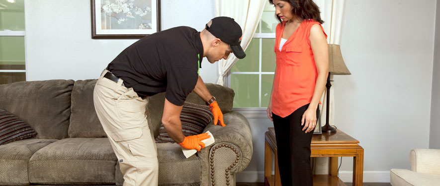 Springfield, OR carpet upholstery cleaning