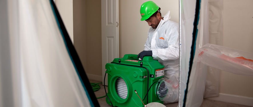 Springfield, OR mold cleanup